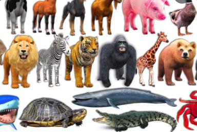 IELTS Speaking Part 1 Topic Wild animals